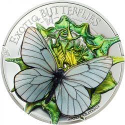 500 Togrog Niestrzęp Głogowiec - Egzotyczne Motyle