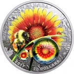 20$ Gailardia i Pszczoła - Piękno pod Słońcem, Natura w Powiększeniu