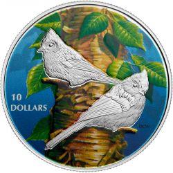 10$ Sikorka Dwubarwna - Ptaki wśród Barw Natury