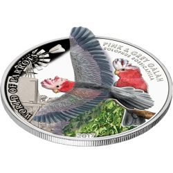 5$ Kakadu Różowa - Świat Papug