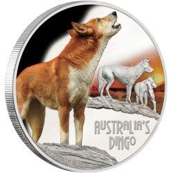 1$ Dingo - Niebezpieczne Zwierzęta