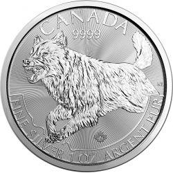 5$ Wilk - Kanadyjskie Drapieżniki