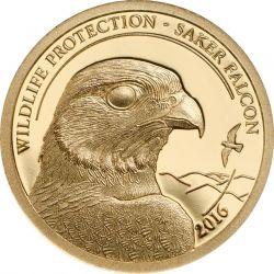 1000 Togrog Raróg Zwyczajny, Sokół – Ochrona Przyrody