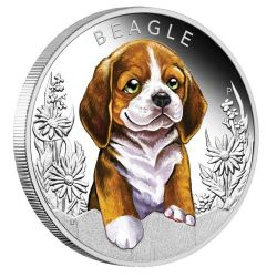 50¢ Beagle - Szczenięta