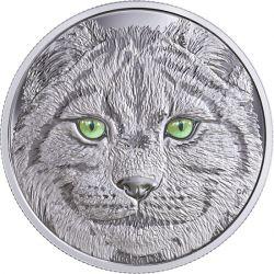 15$ Ryś, Oczy Zwierząt