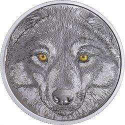 15$ Wilk, Oczy Zwierząt