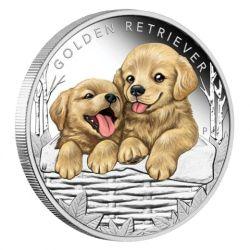 50c Golden Retrevier - Puppies