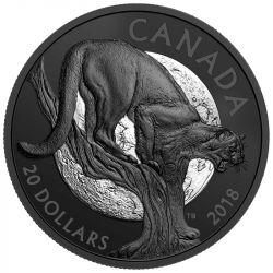 20$ Przebiegła Puma - Natura Nocą