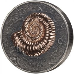 20000 Togrog Ammonoidea - Ewolucja Życia
