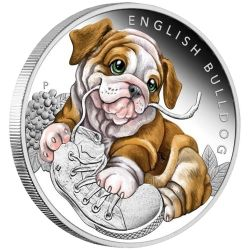 50¢ Buldog Angielski - Szczenięta