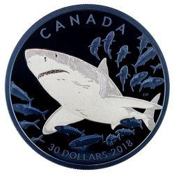 30$ Wielki Biały Rekin