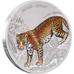 C$ Jaguar - Dzika Natura Nikaragui