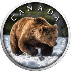 5$ Grizzly - Szlaki Dzikiej Przyrody