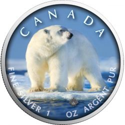 5$ Niedźwiedź Polarny - Szlaki Dzikiej Przyrody