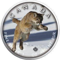 5$ Puma - Szlaki Dzikiej Przyrody