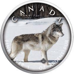 5$ Wilk - Szlaki Dzikiej Przyrody