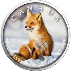 5$ Lis - Szlaki Dzikiej Przyrody