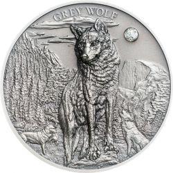 5$ Grey Wolf