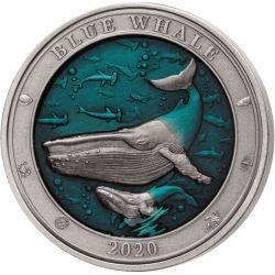 5$ Waleń - Podwodny Świat