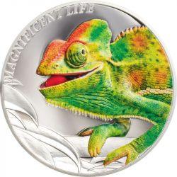 5$ Chameleon - Magnificent...