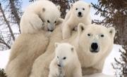 Polarne Dzieci