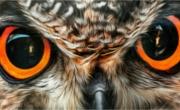 Oczy Zwierząt