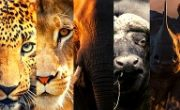 The Big Five - BU