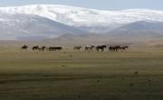 Mongolska Przyroda 3D