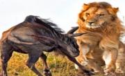 Odważne Zwierzęta