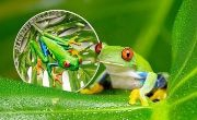 5$ Tree Frog - Magnificent Life