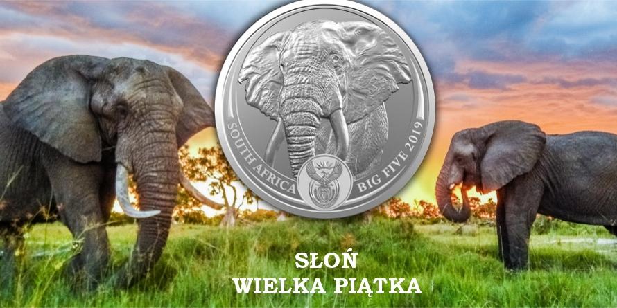 Słoń - Wielka Piątka