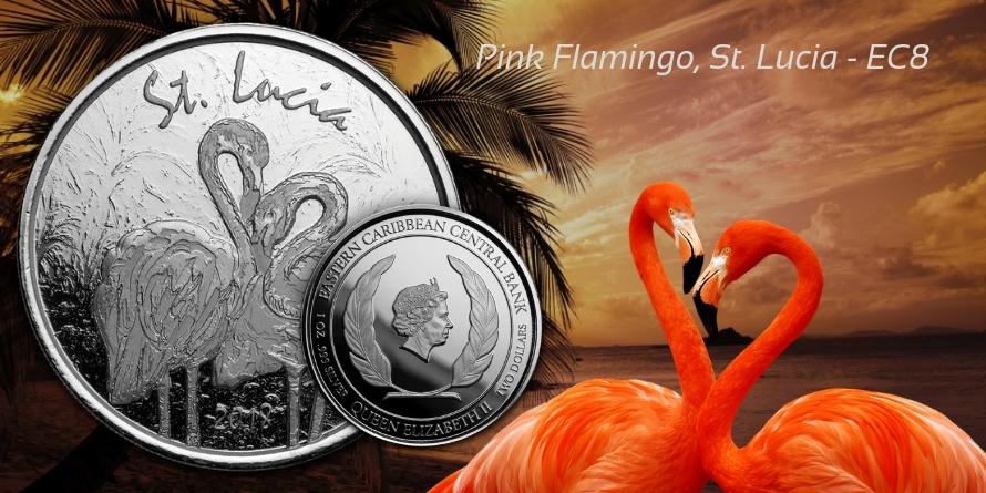 Pink Flamingo, St. Lucia - EC8