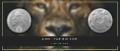 5 Rand Lion - The Big Five